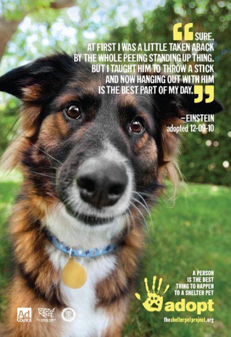 Carolina Animal Rescue Adoption Dogs Puppies
