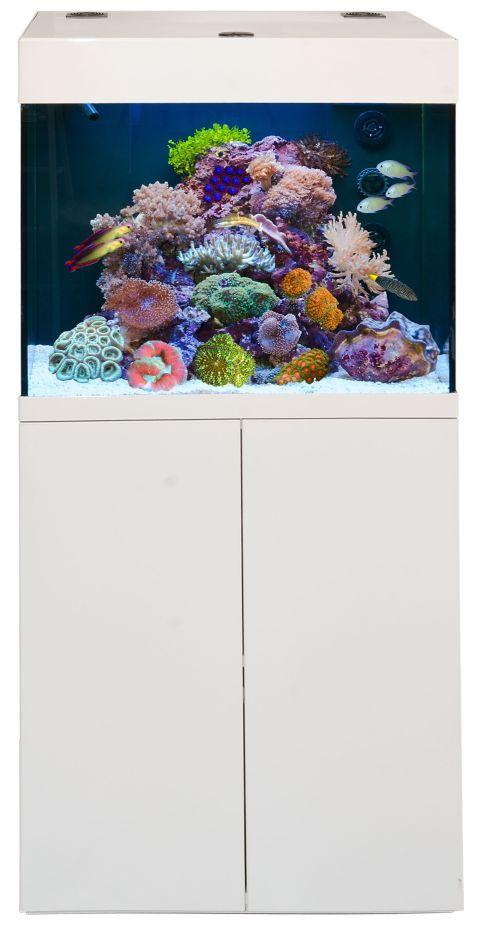 Aqua Medic Kauderni Meerwasser Aquarium Komplett Set - Aquarium-Aquaristik-Shop - aquaPro2000
