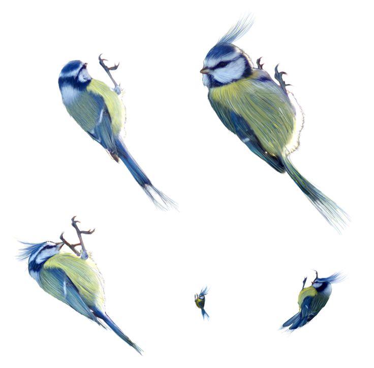 little birds for details png by gd08 on DeviantArt