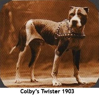 25 Best Ideas About Pit Bull Dogs On Pinterest Pit Dog