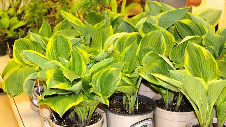 Master Gardener Plant Sale Relocating to Fairgrounds