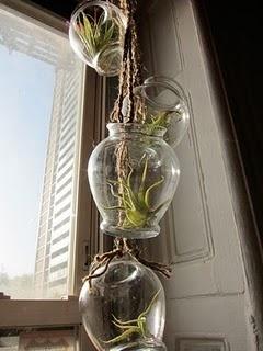 DIY air plant chandelier
