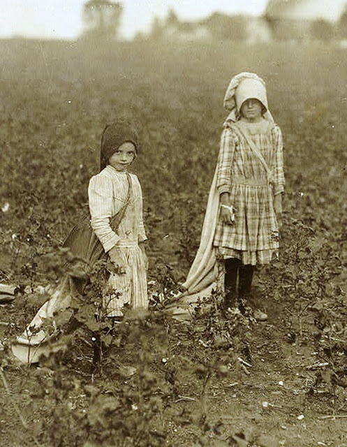 Share Cropper's Children. Picking cotton  , hands bleeding for a penny a pound!