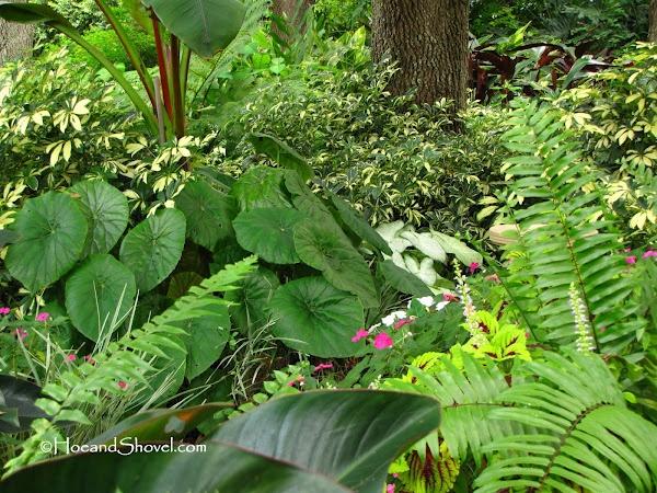 Round leaf begonia florida garden my garden for Beach house landscaping plants