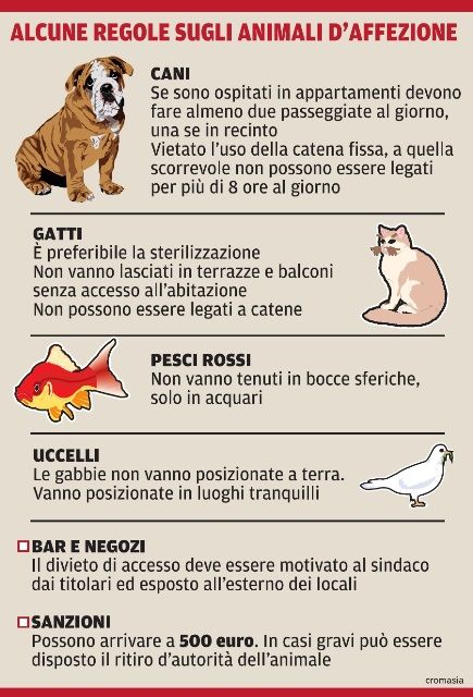 animali domestici infografica italiana - Google Search
