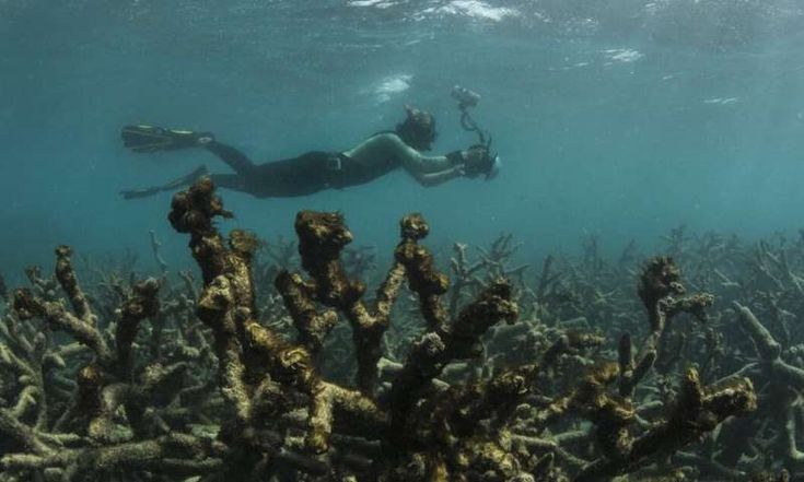 Australia's report to UNESCO on the Great Barrier Reef ...