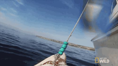 Animated GIFs  photobombing shark