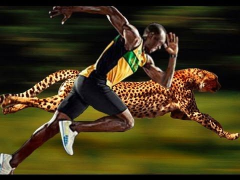 Usain Bolt (world's fastest runner) vs superimposed cheetah (worlds fastest animal)!