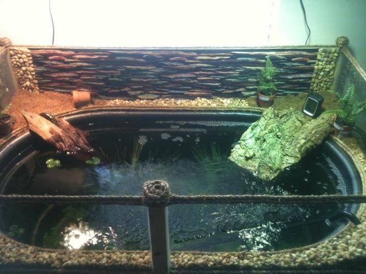 8 Best Diy Indoor Turtle Pond Images On Pinterest Turtle