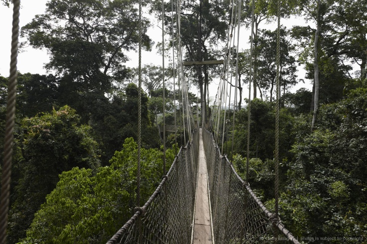 Rope bridge in the trees of the jungle, Kakum National Park, Cape Coast, Ghana, Africa. via http://images.search.yahoo.com/images/view