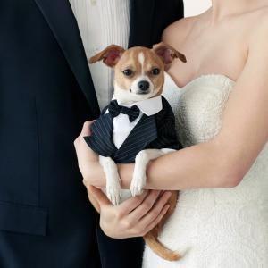 Dogs Can Get Aisle-Ready With the Launch of Martha Stewart Pets' Wedding Finery | Martha Stewart Weddings