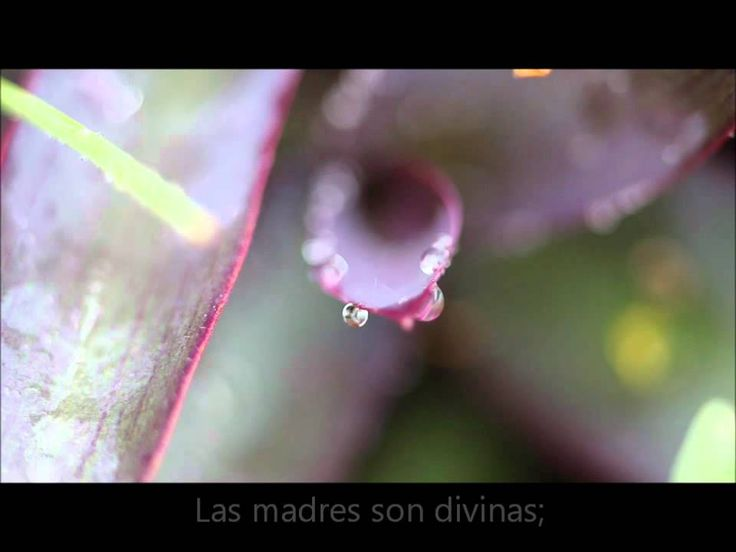 Llamado divino - Música Selecta para Mujeres Jóvenes
