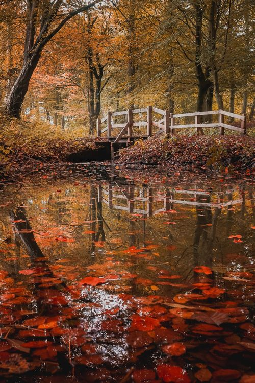 "plasmatics-life: "" Silence of The Leaves - {by Joachim Mortensen} 