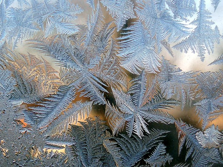 Image result for fern pattern freezing windows