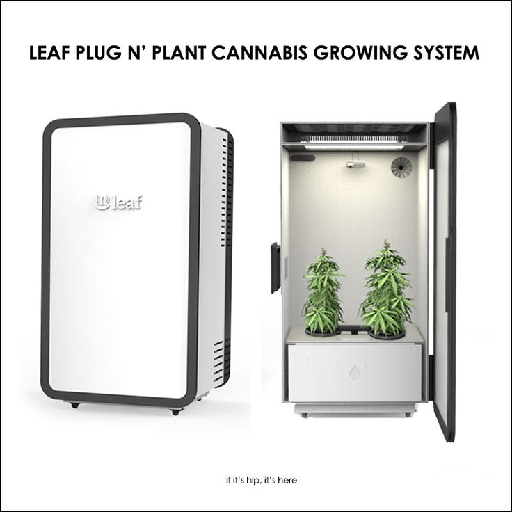 High Tech Plug N Plant Cannabis Home Growing System Leaf