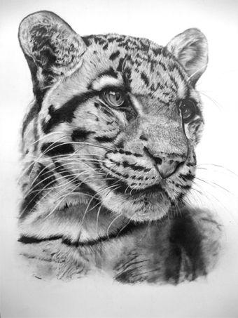 Clouded Leopard 04-11 by Dhekalia.deviantart.com on @deviantART All graphite on A3 smooth Bristol Board  Pencil Grades 4H - 4B