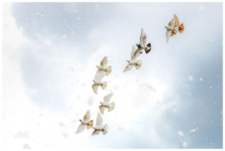 Pigeons - ©Arek Uriasz
