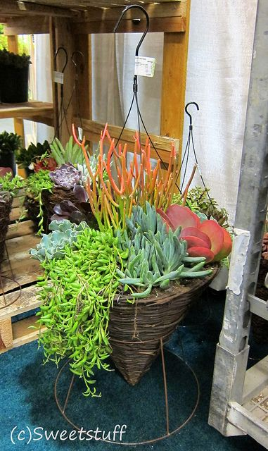 3432 best images about container garden on pinterest for Colorful hanging planters