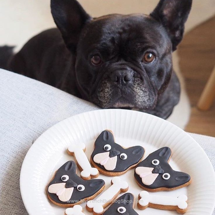 French Bulldog with matching Dog Treats