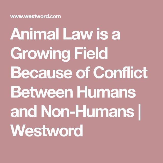 Animal Law is a Growing Field Because of Conflict Between Humans and Non-Humans | Westword