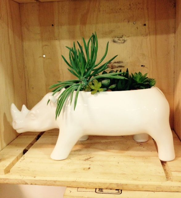 . Rinoceronte
