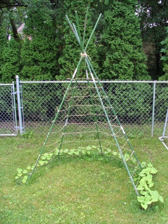 For pole beans and kids