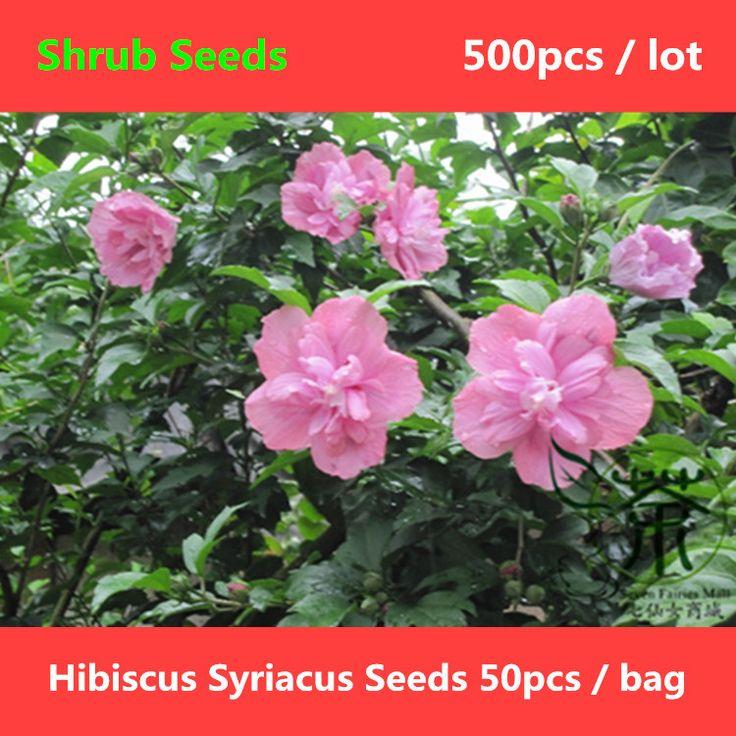 Цветущих растений гибискус Syriacus семена 500 шт., роман завод роза шарона кустарник семена, харди лиственные кустарник роза мальва семена