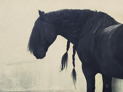 <3Dreams, Braids, Friesian Horses, Black Beautiful, Hair, Hors Pics, Beautiful Creatures, Black Hors, Animal