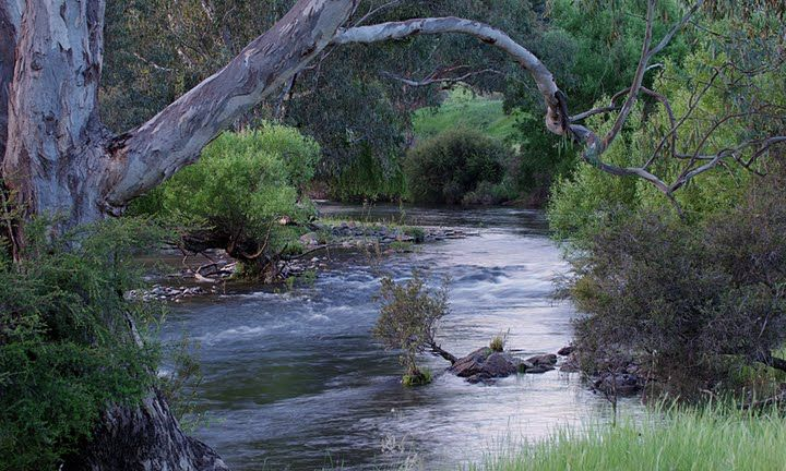 Branches overhanging the river