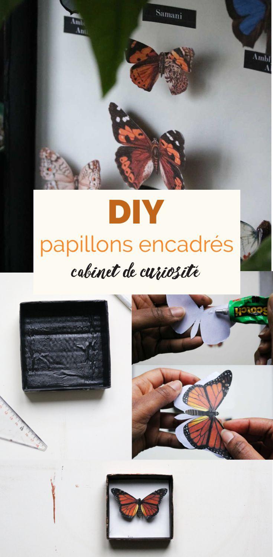 DIY cupboard de curiosités récup : encadrer des papillons en papier
