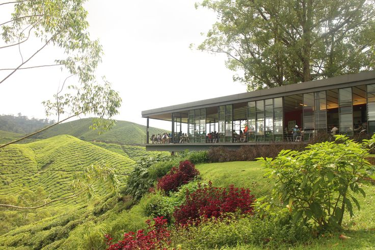 Tea time in Malaysia's Cameron Highlands