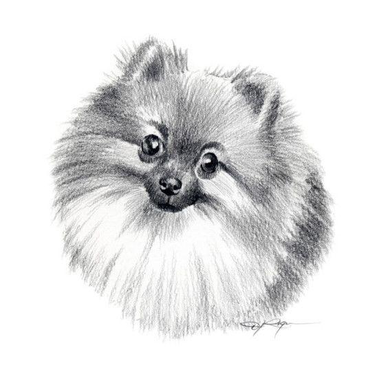 Chien POMÉRANIEN crayon dessin ART Print signée par k9artgallery