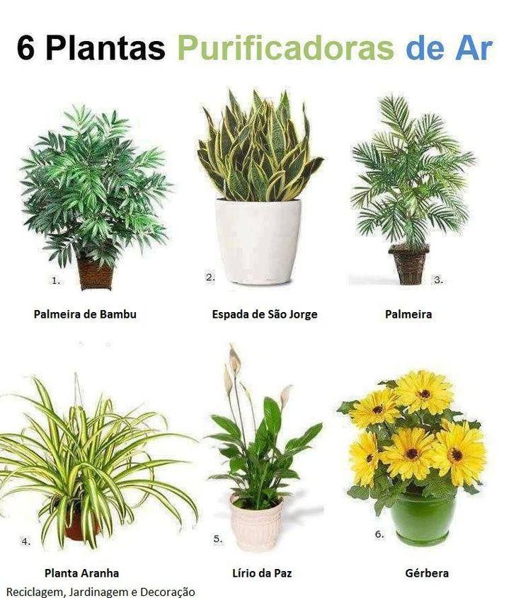 Las 25 mejores ideas sobre plantas purificadoras de aire - Plantas de interior que purifican el aire ...