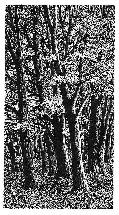 Tall Trees - Sue Scullard,  wood engraving