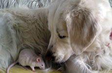 Приучение собаки к новому обитателю дома