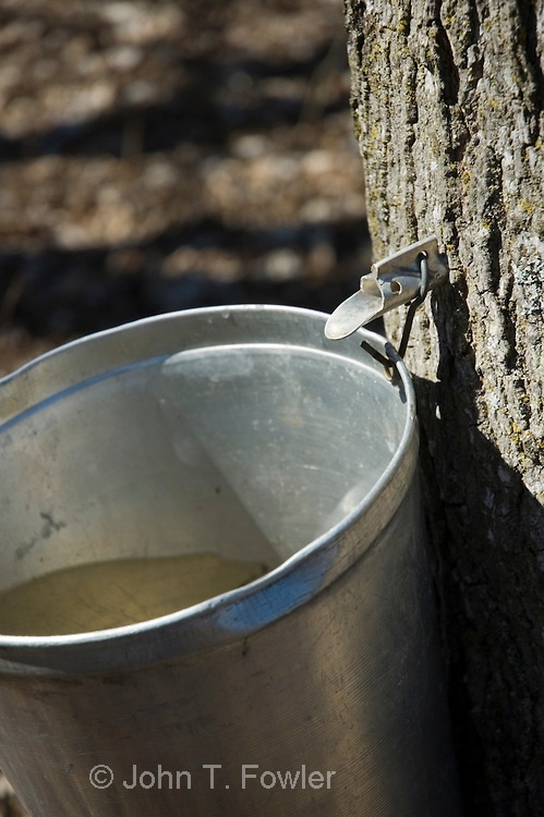 Maple Syrup in the making