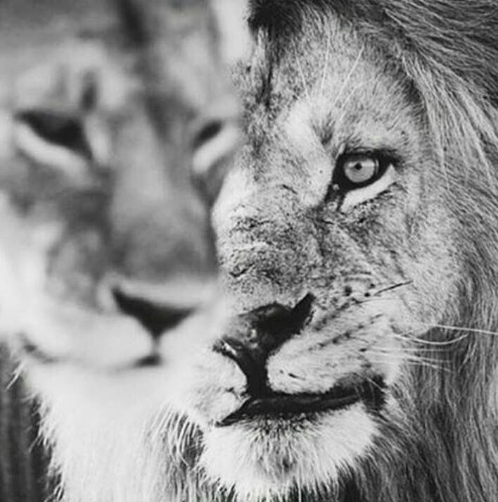 Always in his line of sight... Protecting her...