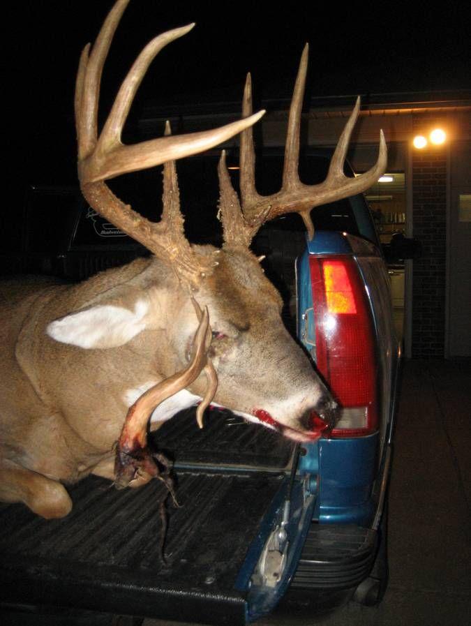 Arkansas Buck With Antler In Eye Musta Bn Some Kinda Fight