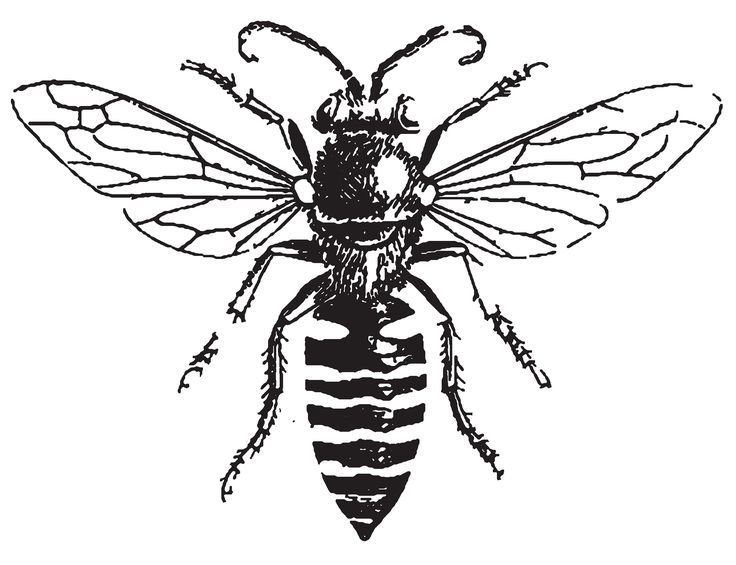Line Drawing Bee : Best bee line art images on pinterest