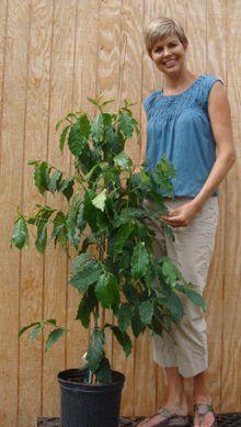 Pam with Avocado Tree
