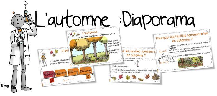 L'automne : Diaporama . Pourquoi les feuilles tombent ? | Bout de Gomme