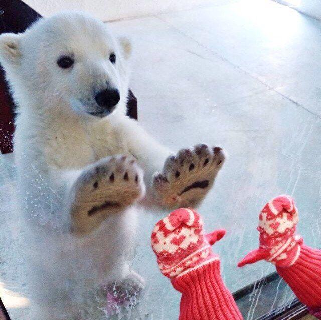 シロクマさんの余興は、ハイタッチ!
