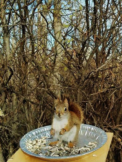 cute squirrel stare :)