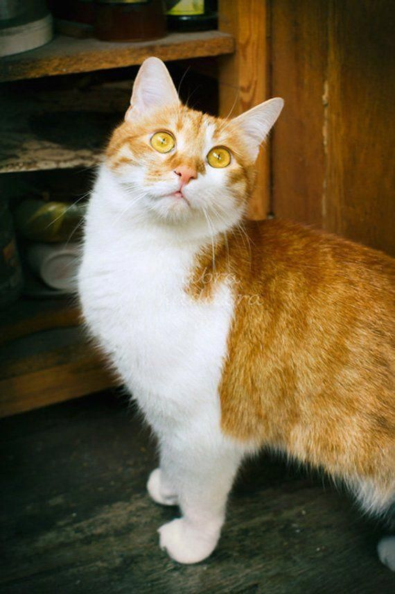 Are Cats Color Blind Catshugging With Images Orange Tabby Cats Tabby Cat Ginger Cats