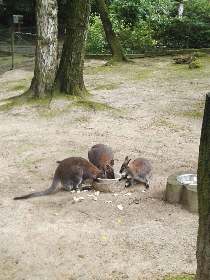 Zoo Decin - Czech Republic