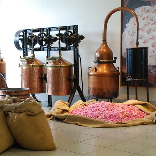 La fabrique des fleurs, part of the perfume-making process in Grasse, 20 mins from Lou Messugo