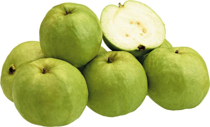Ổi là loại cây được trồng rất phổ biến trong vườn nhà để lấy quả ăn. Hiện nay, do những công dụng tuyệt vời đem lại cho sức khỏe con người, cây ổi đang được trồng thành những vùng rộng lớn, chuyên canh để kinh doanh.