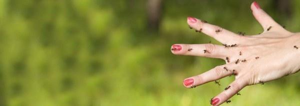 Natural Bug Repellant, nontoxic repellent for ants. DIY  Rimedi naturali contro le Formiche #formica