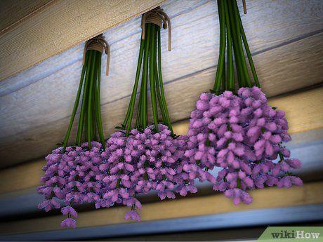 les 25 meilleures idées de la catégorie faire sécher des fleurs