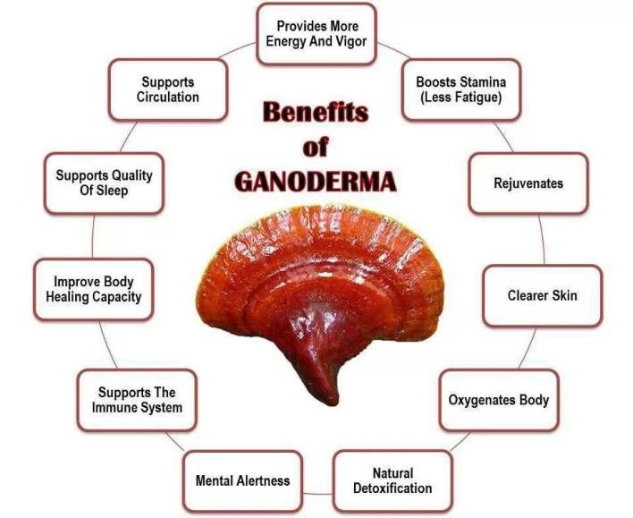 Listed in Li shizhen's (Compendium of Materia Medica) that Ganoderma lucidum is good for wisdom, skin color. Modern research shows that Ganoderma lucidum is an amazing beauty care fungi of anti-wri...